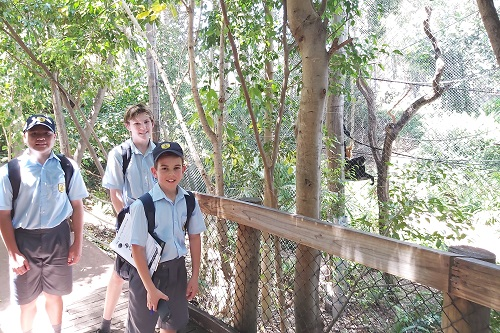 Wk 6 Yr 7 Zoo Excursion Nov 2019 3 JPS