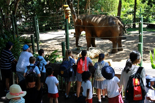 Wk 4 Yr 7 Zoo Excursion Oct 26 2018 4 JPS