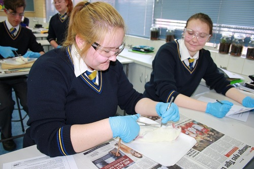 Wk 9 Yr 11 Rat Dissection 3 JPS
